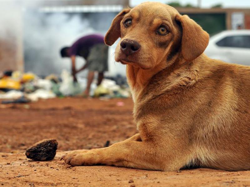 Prefeitura de Paraguaçu começa a cadastrar cães e gatos para programa de castração