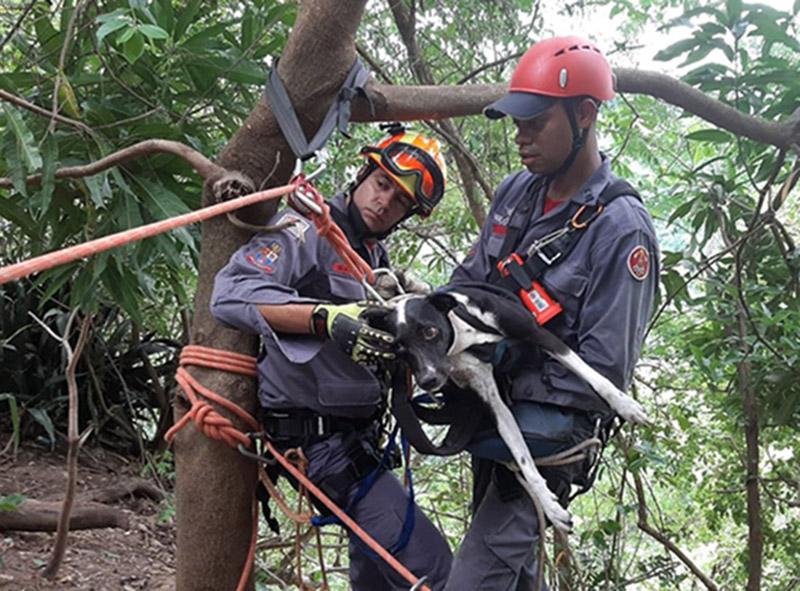 Cachorra é resgatada com vida quase um mês depois de cair em precipício em Marília