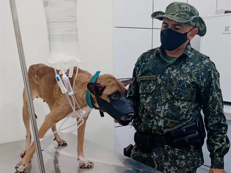 Inquérito policial apura denúncia de maus-tratos e suposto abuso sexual contra cadela, em Rosana