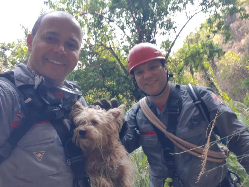 Cão é resgatado cinco dias após cair em vale de 50 metros em Marília