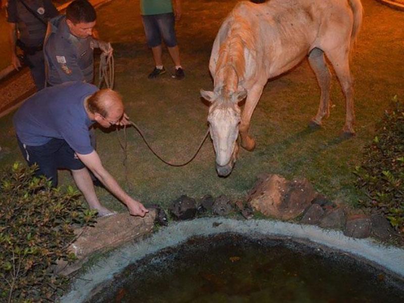 Cavalo é encontrado em situação de maus-tratos em Tupã