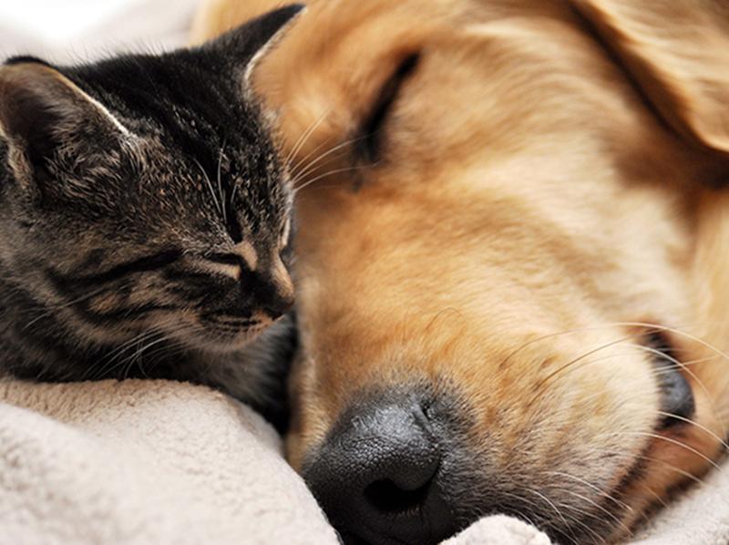 Como proteger os pets do frio