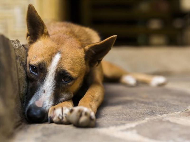 Governo Federal sanciona lei que proíbe eutanásia de cães e gatos de rua