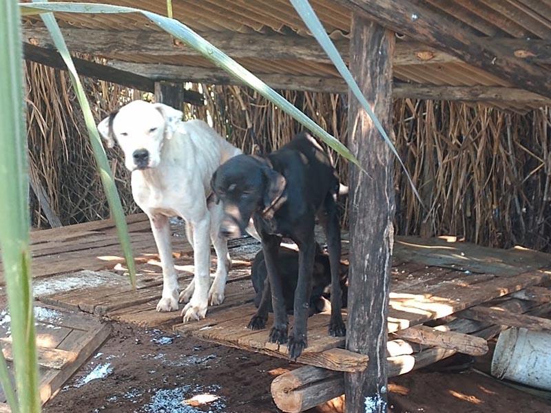 Cães são resgatados com sinais de maus-tratos em Tupã