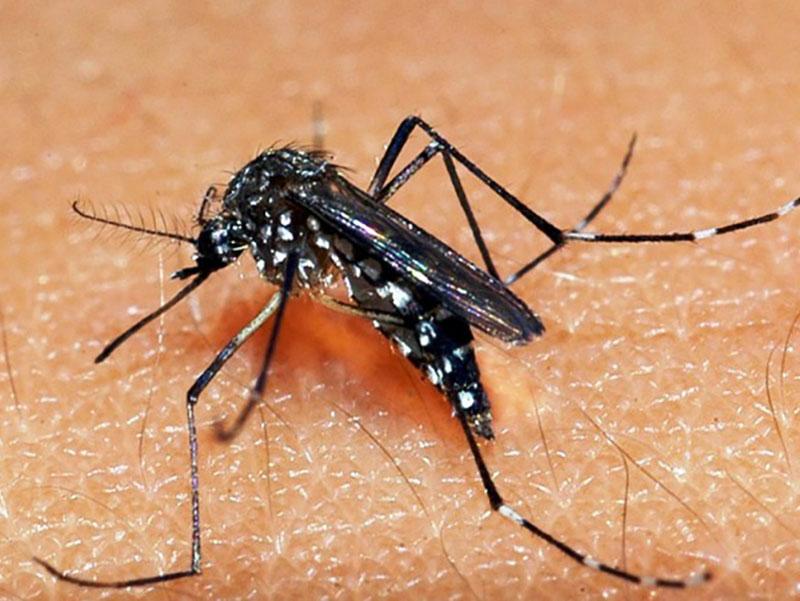 Paraguaçu Paulista tem 553 casos positivos de dengue