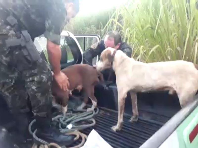Grupo é multado em R$ 1,5 mil por caçar capivaras em represa de Tupã