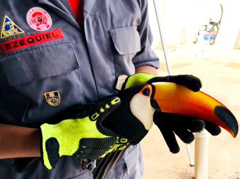 Tucano ferido é resgatado pelos bombeiros em Paraguaçu Paulista