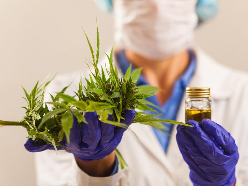 Comissão aprova proposta para legalizar o cultivo de Cannabis para fins medicinais