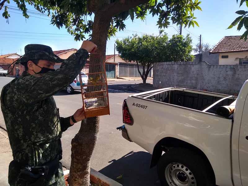 Polícia Ambiental apreende pássaros mantidos em cativeiro em Paraguaçu Paulista