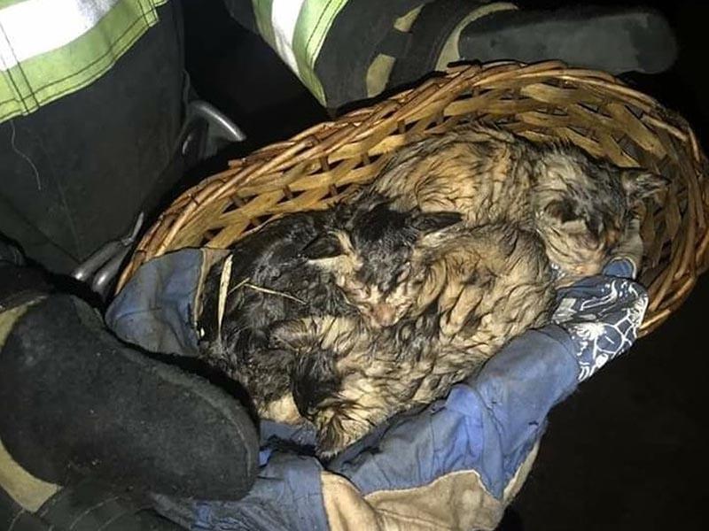 Bombeiros resgatam três gatos de casa que pegou fogo em Paraguaçu Paulista