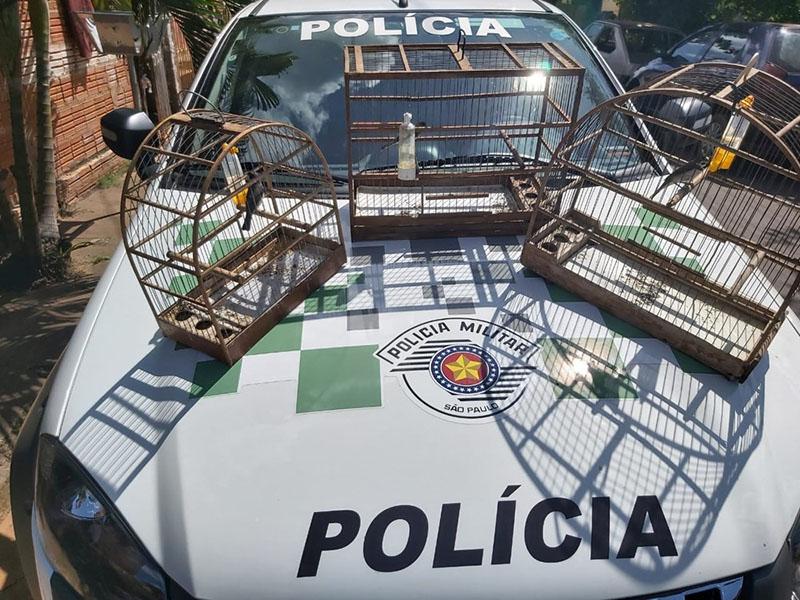 Morador é multado por manter pássaros silvestres em cativeiro em Echaporã