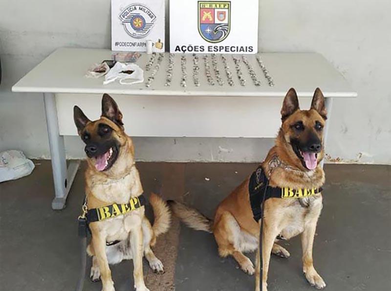 Com ajuda do Canil, Polícia apreende mais de 200 porções de maconha em Paraguaçu