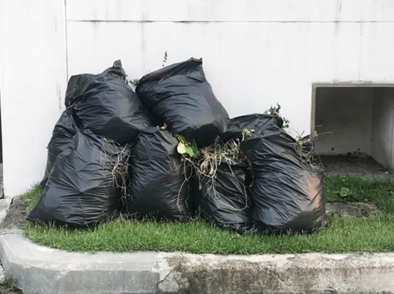Coleta de lixo muda para sistema de porta em porta
