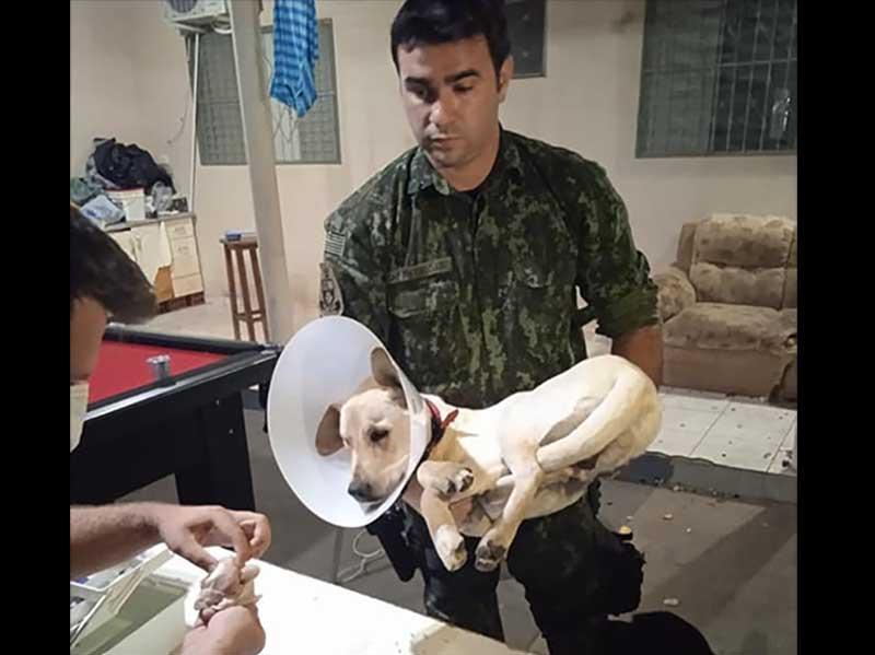 Polícia Ambiental resgata cão que foi castrado em república de estudantes em Presidente Prudente