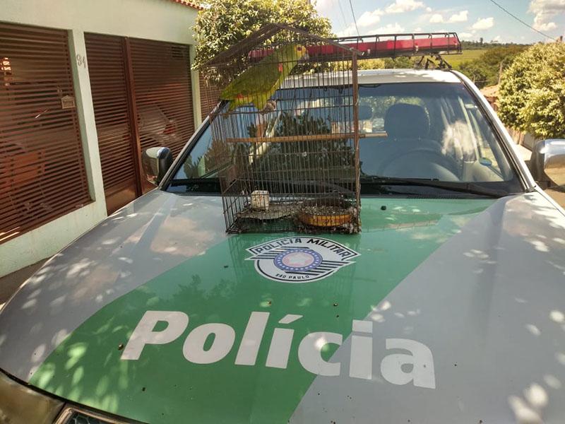 Morador de Borá é advertido pela Polícia Ambiental por manter papagaio em cativeiro