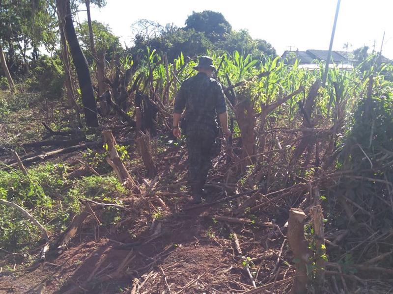 Polícia Ambiental flagra corte ilegal de árvores em Paraguaçu Paulista