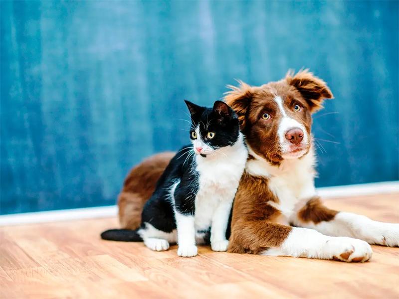 Cães e gatos podem ter vírus da covid-19, mas não transmitem a doença